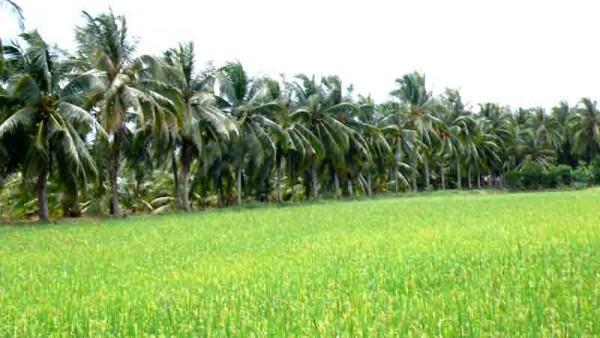Ben Tre – huge potential of ecological tourism in Vietnam
