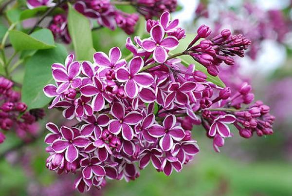 Da Lat flowers