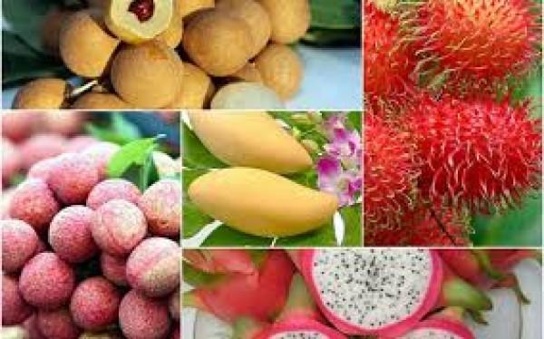 My Tho fruit market