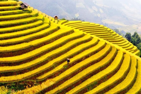 sapa-highlights-3d2n-by-bus