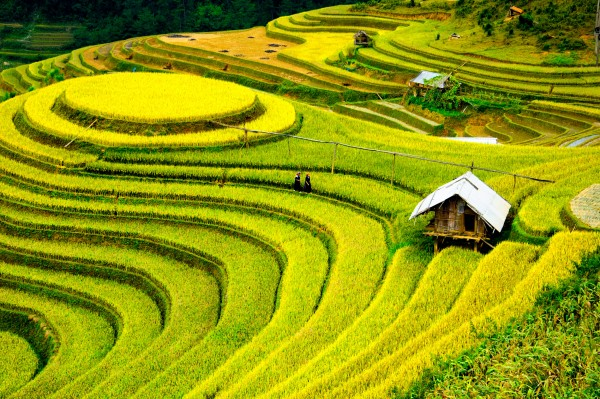 colors-of-the-north-vietnam-8-days-tour